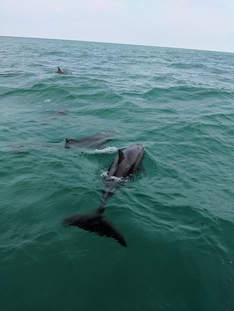 dolphin tours florida Bikini key west