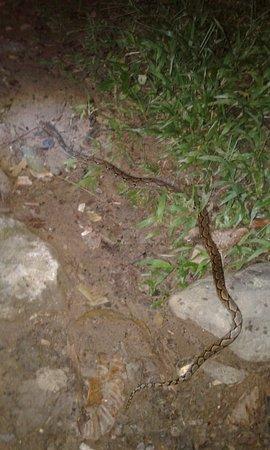 Et voici le visiteur du soir devant notre tente .