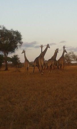 Jodam Magical Safaris: Craving for an adventure in the wild? Head right over to www.jodamsafaris.com and pick any of our safari, or create your own safari #MakeItKenya