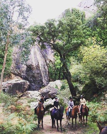 Vila Nova de Milfontes, Portugalsko: All 6 Horses went on a fieldtripp to a waterfall, 2Hour walk