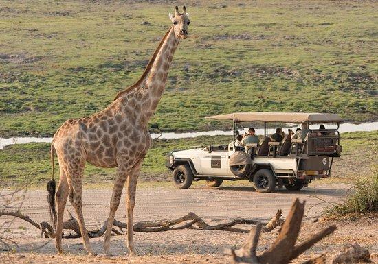 Kasane, Botswana: getlstd_property_photo