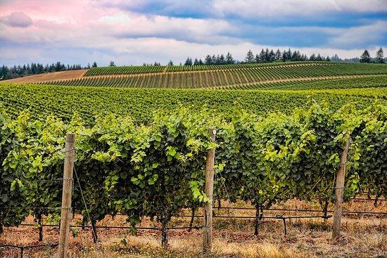 Bordeaux vin dagstur