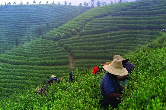 Erleben Sie Chengdu: Private Tee-Tour...
