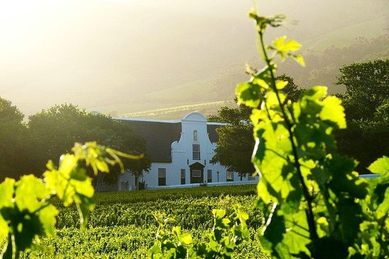 Cape Winelands Meal and Wine Private...