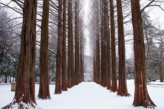 Winter Sonata tv-tour op Nami Island ...