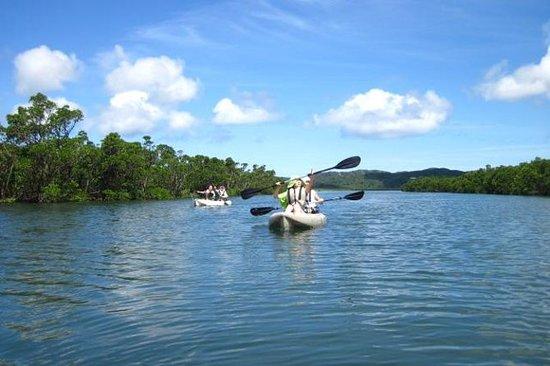 Éco-excursion en kayak de l'île...