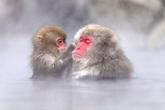 雪猴,善光寺和长野清酒全日游