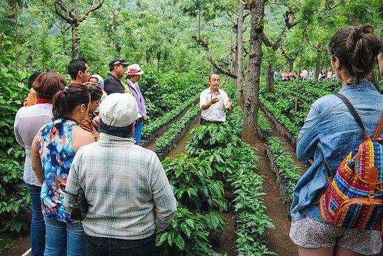 马那瓜的农场和咖啡之旅马塔加尔帕