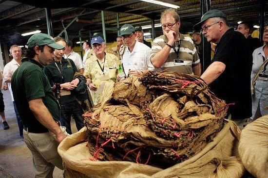 从马那瓜出发的雪茄之旅和埃斯特利市