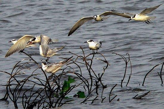 Muthurajawela在尼甘布观鸟私人野生动物园