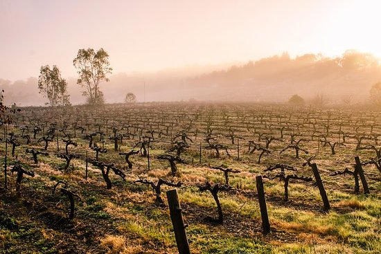 Barossa Valley ved Private Tour din...