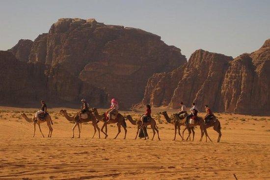 Sharm El Sheikh Bédouin Nuit avec...