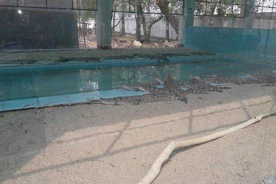 Parque ecológico Gharial (cocodrilo...