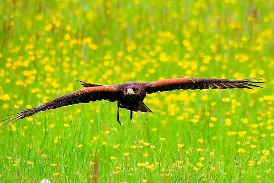 巴斯城市之旅和飞鹰体验 - 布里斯托尔一日游