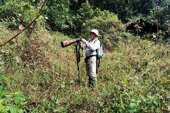 Private Guided Kitulgala Birdwatching...