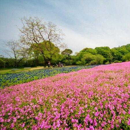 Nobeoka Botanical Garden