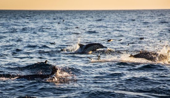 """Newport Beach's premier Dolphin and Whale Watching Tour. Sunset Harbor Cruise also available.  We specialize in charters of 6 person(s) or less so we can provide you with the comfort and attention you deserve. Family-Friendly. Kid Friendly.  """"Capturing lifetime memories with each trip!""""~ Captain Nick Daily Trips. Book Online: www.emwexcursions.com"""