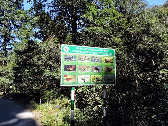 Fauna found in Kilbury Forest range