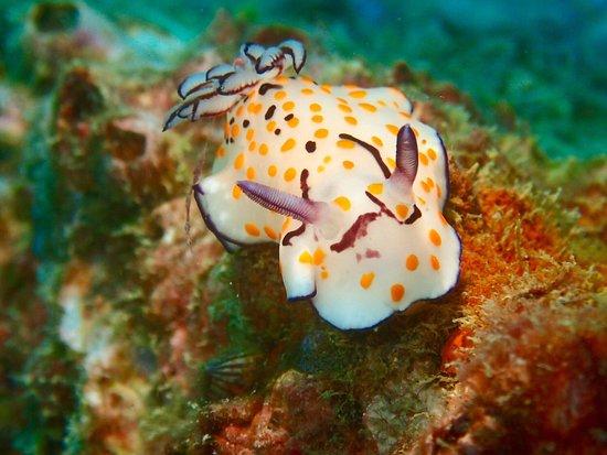 Oktavia Dive Center: Nudibranch