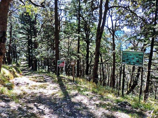 Pangot and Kilbury Bird Sanctuary: Road opposite Kilbury Forest Rest House leading to Pangot village and Naina Peak