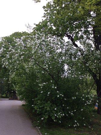 Ботанический сад Осло
