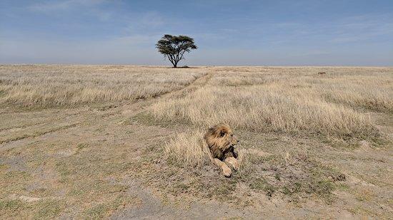 Udaay Safari & Tours (T) Ltd: plains of Serengeti