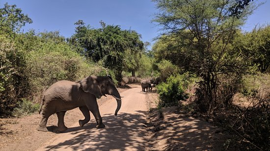 Udaay Safari & Tours (T) Ltd: Elephants of Lake Manyara