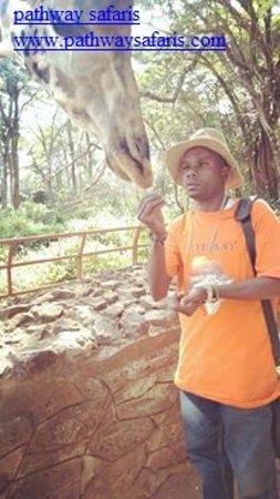 Feeding the Giraffe at Giraffe center in Nairobi on a tour with guest