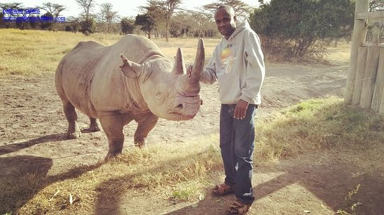 Laikipia County, เคนยา: Baraka, the blind rhino at Ol-Pejeta conservancy, getting close and feed as well as hear his story