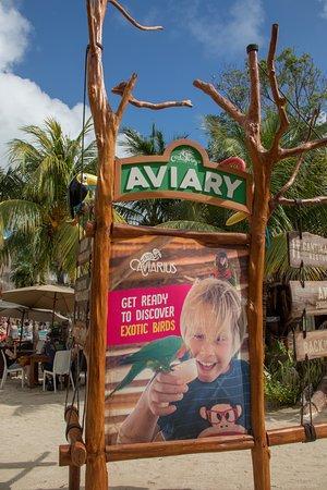The Aviary at Costa Maya