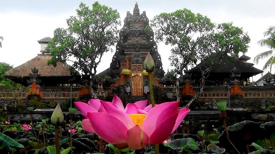 Great picture, very beautiful flowers lotus, when we will visit to Saraswati temple Ubud palace. Trust your Holiday to Bali with our service