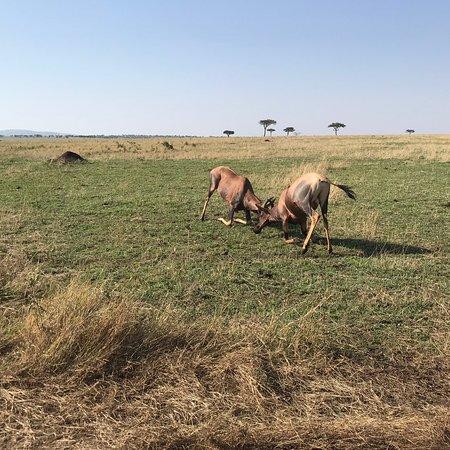 Amazing Serengeti Tour