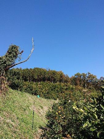 Mitake Orchard