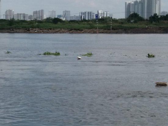 Saigon River: Søppel som flyter på Saigon river. Dette er ikke bra. Vil vietnameserne  ha det slik? Hvem gjør noe?