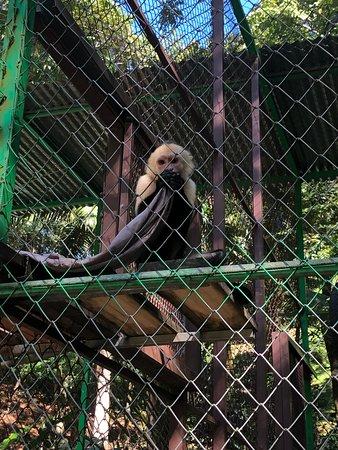 White Faced Monkey!