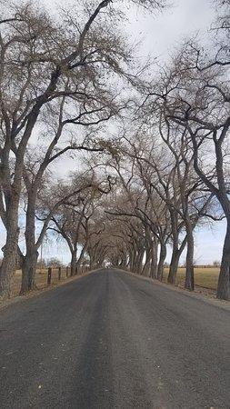 Dodge Road