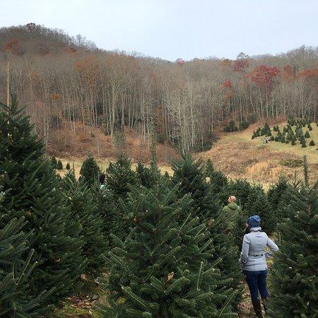 Cornett Deal Christmas Tree Farm