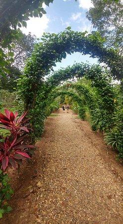 Ảnh về Bocawina Rainforest Lodge & Adventures