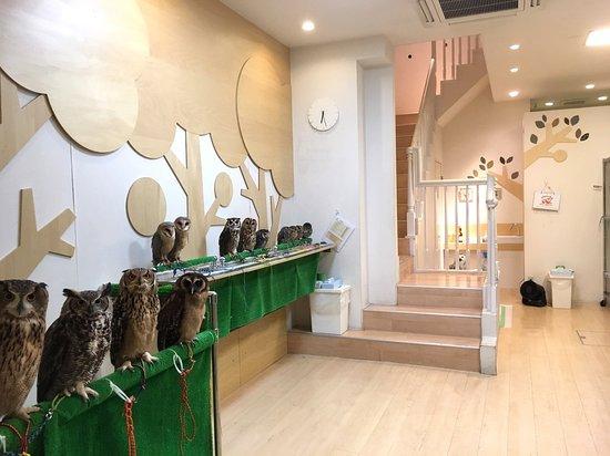 Fukuro no Mise, Hakata: たくさんのフクロウ達がお待ちしております!