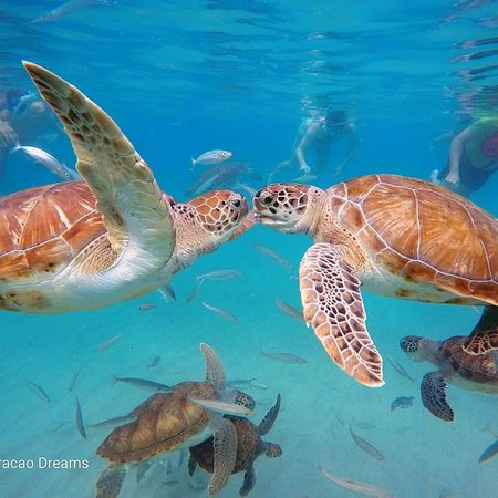 Кюрасао: Snorkeling Curaçao Dreams Tours