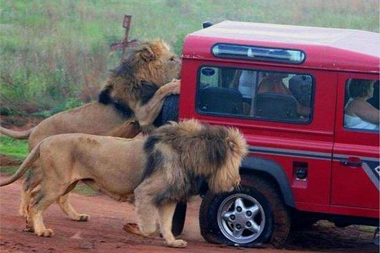 Safari og PheZulu Village Day Tour