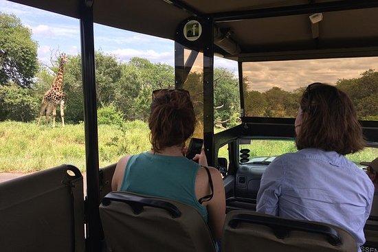 Kleine groep ochtend safari in Kruger ...