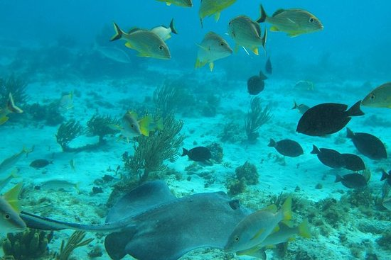 Stingray City e Snorkel Tour con