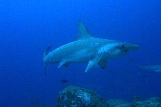 Plongée sous-marine au Kicker Rock...