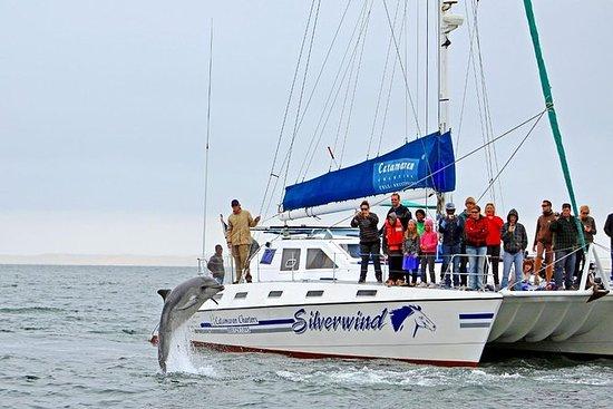 Delphin- und Seehund-Bootstour mit...