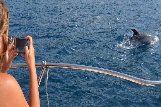 Observação de golfinhos em Sesimbra