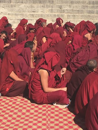 5-Night Lhasa City Private Tour: Monks at the temple.