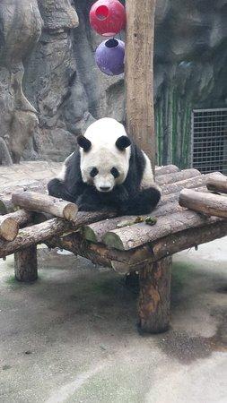 A squatting panda