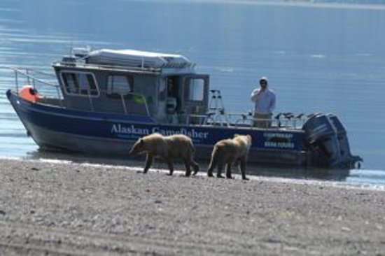 Soldotna, AK: Bears on the beach checking out the GameFisher