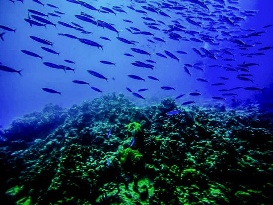 Enomis VIP Diving Curacao